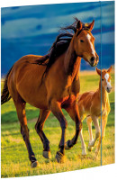Sammelmappe A3 Free Horses Karton mit Gummizug_1