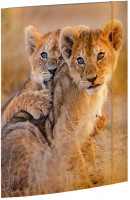 Sammelmappe A3 African Lions_1