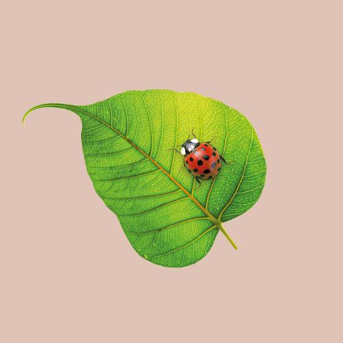 CHIC MIC Serviette Napkin Ladybug